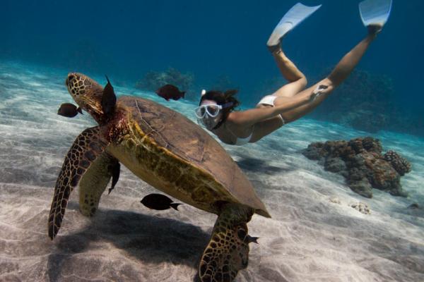 snorkel tours trips lauderdale