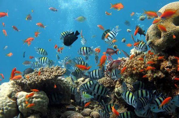 snorkel trips ft lauderdale